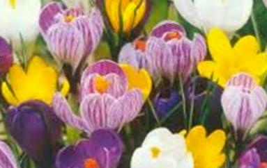 Il fiore della speranza