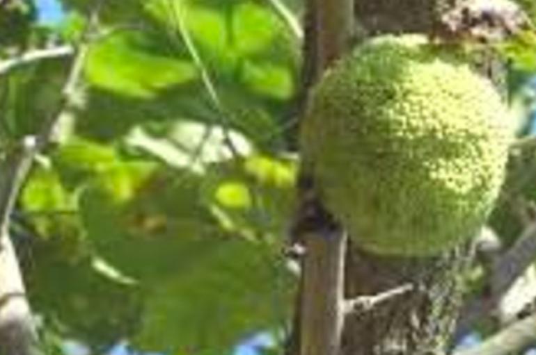 Un frutto misterioso