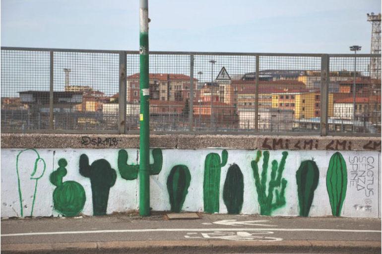 "Fotografia:  ""cactus senza spine"" di Greta Polimene"