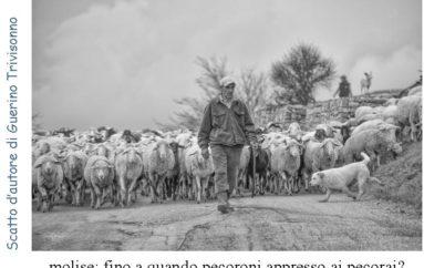 Scatto d'autore di Guerino Trivisonno – molise: fino a quando pecoroni appresso ai pecorai?